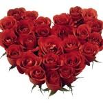 Roses Rouges Un Cadeau Idéal Pour La Saint Valentin