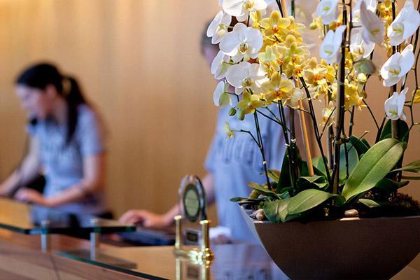 Plantes & Fleurs décoratives